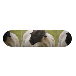 Black Faced Sheep Skate Deck