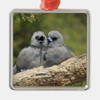 Black Faced Woodswallow, Artamus cinereus, Christmas Ornament