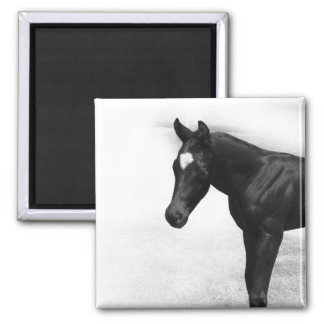 Black Foal Magnet
