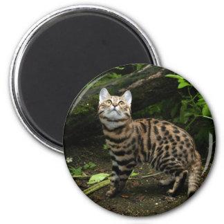 black footed cat keychain 6 cm round magnet