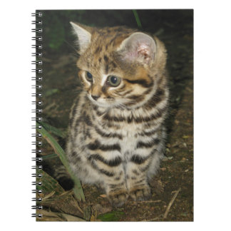Black footed cat kitten spiral note books
