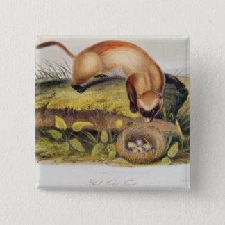 Black-footed Ferret 15 Cm Square Badge