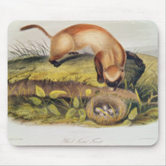 Black-footed Ferret Mouse Mat