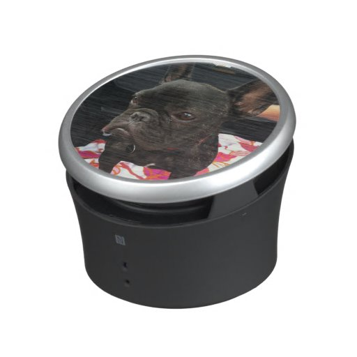 Black French Bulldog Speaker
