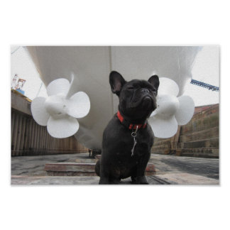 Black French Bulldog Poster