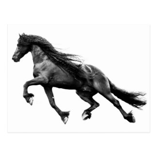 Black friesian stallion - friese horse postcard