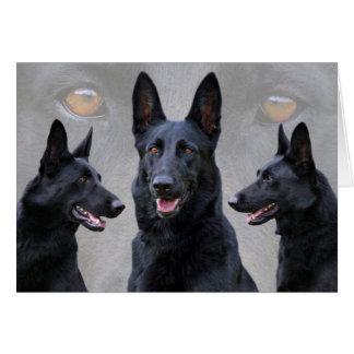 Black German Shepherd Collage Card