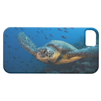 Black (Green) Turtle (Chelonia agassizi) off iPhone 5 Covers