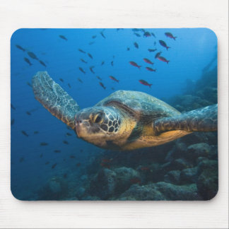 Black (Green) Turtle (Chelonia agassizi) off Mouse Mat