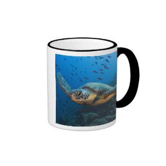 Black (Green) Turtle (Chelonia agassizi) off Mug