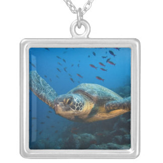 Black (Green) Turtle (Chelonia agassizi) off Silver Plated Necklace