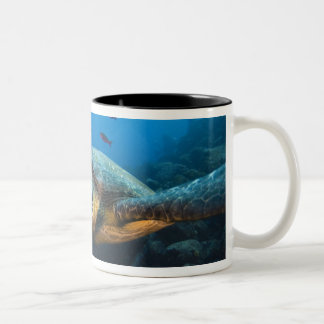 Black (Green) Turtle (Chelonia agassizi) off Two-Tone Coffee Mug