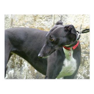 Black greyhound (a36) postcard