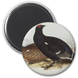 Black Grouse 6 Cm Round Magnet