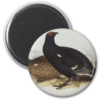 Black Grouse Magnets