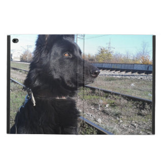 Black GSD with Train Tracks