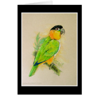 Black Headed Caique Card