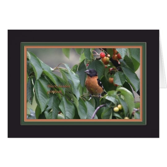 Black-headed grosbeak5905 card