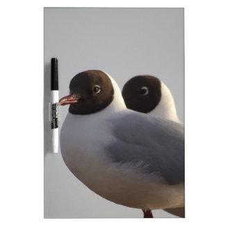 black-headed gull dry erase board