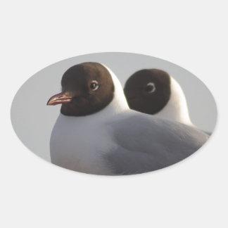 black-headed gull oval sticker