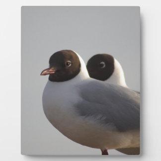 black-headed gull photo plaques