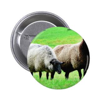 Black Headed Sheep 6 Cm Round Badge