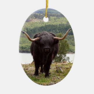 Black Highland cattle, Scotland Christmas Ornament