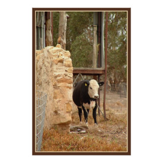black holstein cow print with border