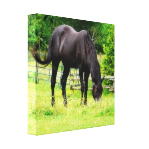 Black Horse  Big and Beautiful Gallery Wrap Canvas