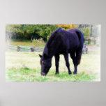 Black Horse Grazes