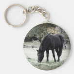 Black Horse Grazing on Farm Field Photograph