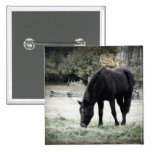 Black Horse Grazing on Farm Field Photograph Pinback Buttons