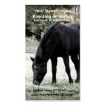 Black Horse Grazing on Rural Farm Pasture Photo