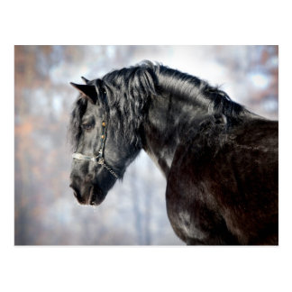 Black horse in forest postcard