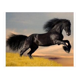 black_horse_running.jpg postcard