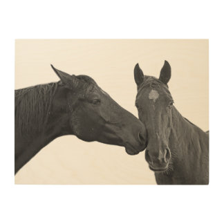Black horse stallion photography black and white wood print