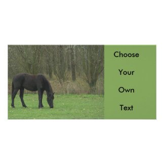Black Horse standing Photo Cards