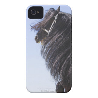 black horse with long mane iPhone 4 cover