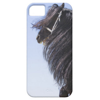 black horse with long mane iPhone 5 cases