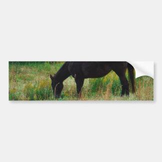 Black horse : yellow flowers bumper sticker