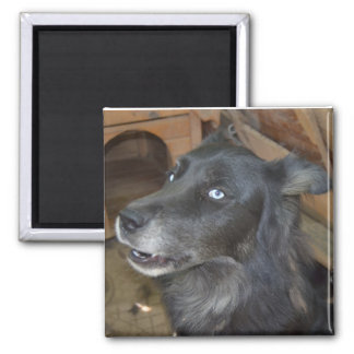 Black Husky says Cool Story Bro Square Magnet