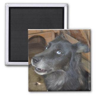 Black Husky says Cool Story Bro Square Magnet