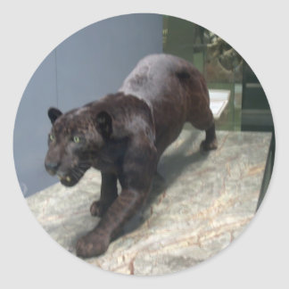 Black Jaguar (Panthera onca) Classic Round Sticker