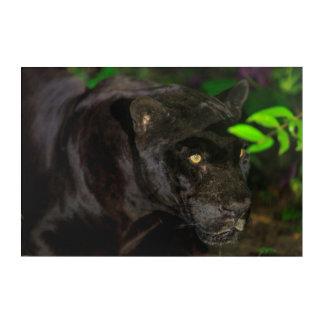 Black Jaguar Prowling Acrylic Wall Art