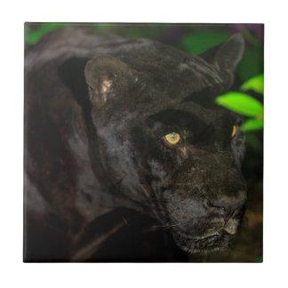 Black Jaguar Prowling Tile