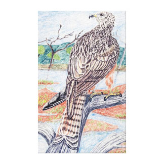 Black Kite Gallery Wrapped Canvas