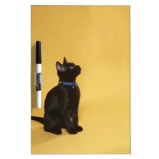 Black kitten in collar dry erase board