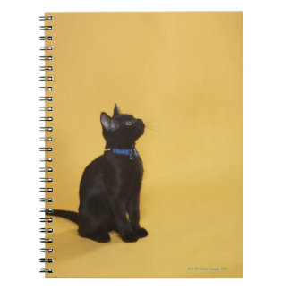Black kitten in collar notebook