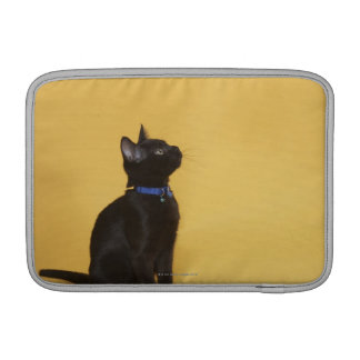 Black kitten in collar sleeve for MacBook air