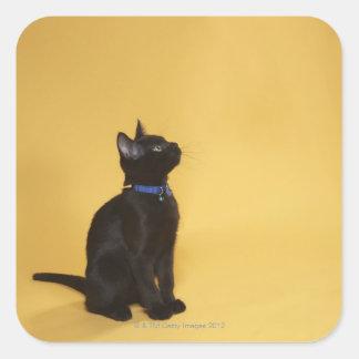 Black kitten in collar square sticker